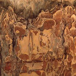 Face of Nature in Wood, Vashon Island, Washington, US