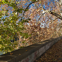 Autumn on the banks of Tiber river, Rome.
