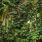 St. Dunstans Overgrown - London