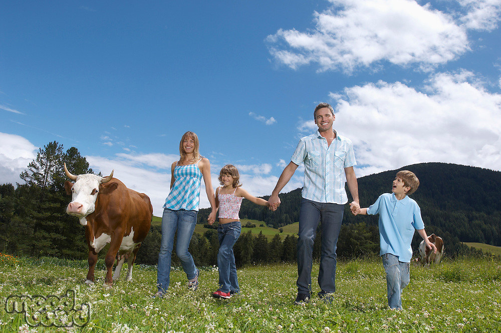 Parents and children (7-9) holding hands walking in field with cow