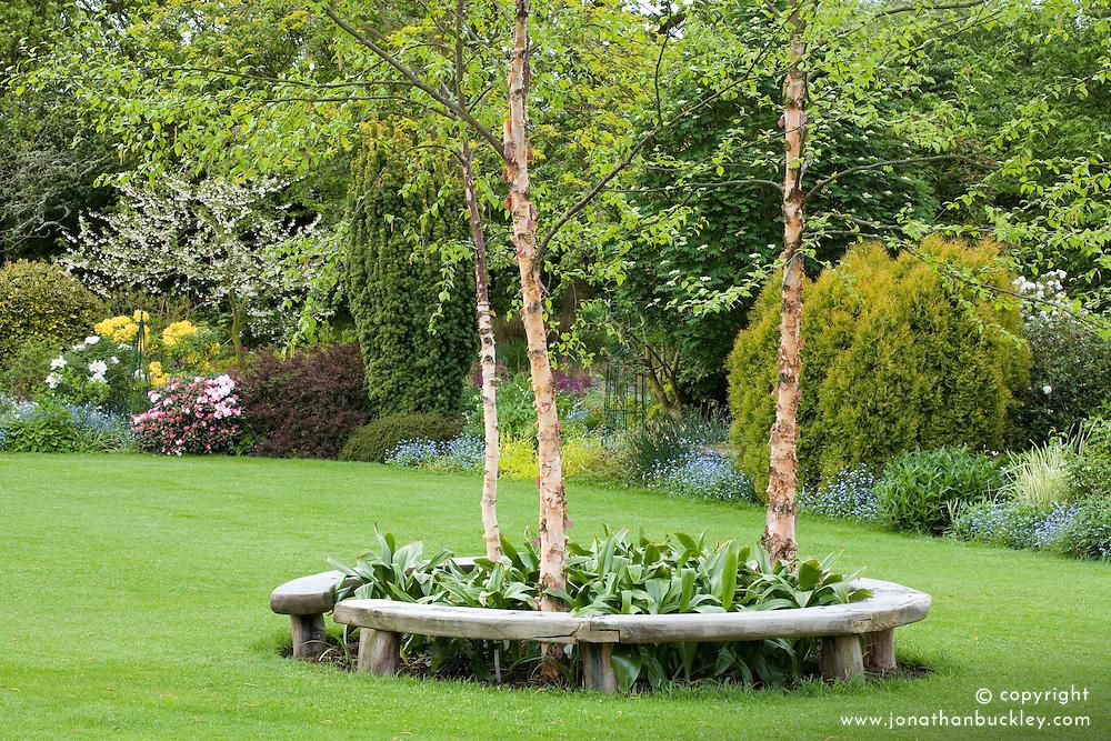 Curved bench seats around three birch trees - Betula nigra 'Heritage' in John Massey's garden in spring