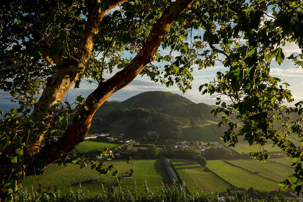 Platanus x hispanica tree over Faial. Faial, Azores, Portugal