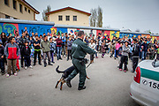 After a fire broke out in one of the highrise buildings at the Lunik IX housing complex in Kosice a police man with his dog is keeping children and inhabitants in distance from the fire side. The fireman were escorted by the police to the housing complex. Lunik IX has officially 6542 registered (12/2015) inhabitants and almost all of them are of Roma ethnicity.