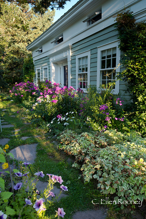 A border Phlox paniculata and Cosmos in front of an artist's garden in Potter Hollow, New York State, U.S.A.