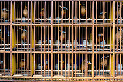 Caged songbirds in a public park in Xishuangbanna, China.