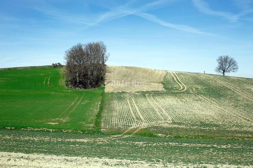 partly clearing of small forest woods among agricultural field in France