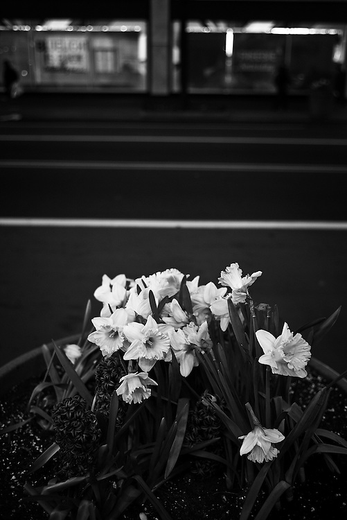 Flowers on sidewalk in spring, West 34th Street, New York, NY, US