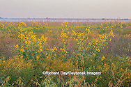 63863-02514 Wildflowers at Prairie Ridge State Natural Area, Marion Co., IL