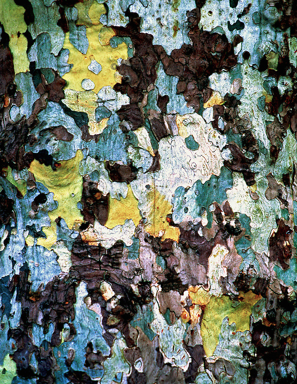 Bark of a sycamore (?) in Aix-en-Provence.  Its soft natural colors have been saturated a bit for emphasis.