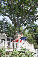 Historic balcony built around large ash tree in the custom house at Hadlyme Ferry crossing the Connecticut River.