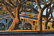 Live oaks and wooden bridge that connect  Corolla lighthouse with the Whale Head Club.
