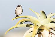 Karoo Desert Botanical Garden