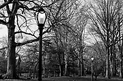 Central Park in late winter in black and white with street lamps lit and bare trees in early evening, New York, NY.