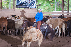 September 24, 2017 - Minshall Farm Cutting 6, held at Minshall Farms, Hillsburgh Ontario. The event was put on by the Ontario Cutting Horse Association. Riding in the $25,000 Novice Horse Class is Toy Donaldson on Duals Peps Tom at owned by James Cook.