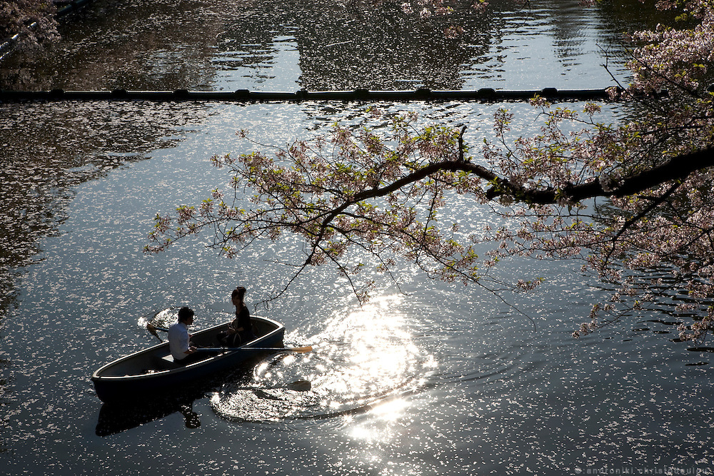 Japanese couple enjoying a boat ride under cherry trees in the canal that surounds the palace in Tokyo.  Every spring during the few weeks of cherry blossoms, japanese people enjoy the beauty of cherry-tree flowers by having small parties or walks in the parks and other locations where these trees blossom.