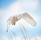 Audubon Contest