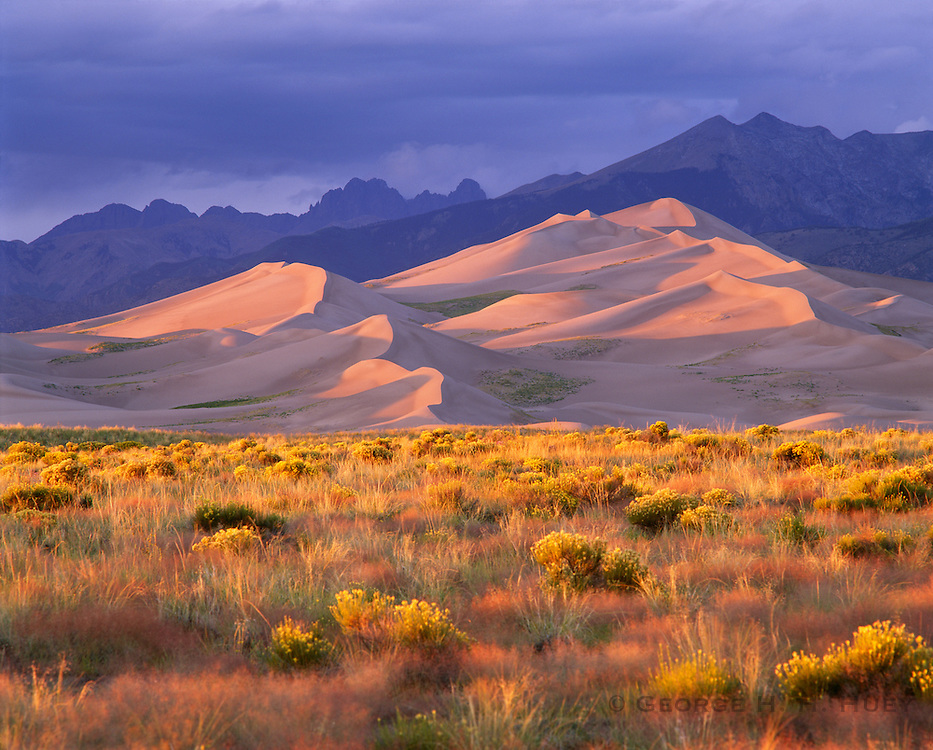 0404-1000D ~ Copyright: George H. H. Huey ~ Sand Dunes at sunset with Sangre de Christo mountains in background. Snakeweed [Gutierezia savothrae] and rabbitbrush [Chrysothamnus nauseous] in foreground. Great Sand Dunes National Park and Preserve, Colorado.