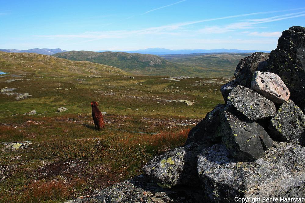 Tell på toppen av Rødhåmmåren ved Schulzhytta. Fongen i bakgrunnen. Skarvene og Roltdal nasjonalpark, Selbu. Sett fra Rødhåmmåren. Skarvene og Roltdalen nasjonalpark. Foto: Bente Haarstad