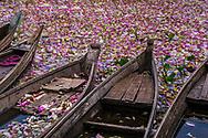 Lotus Flower Lake, Myanmar