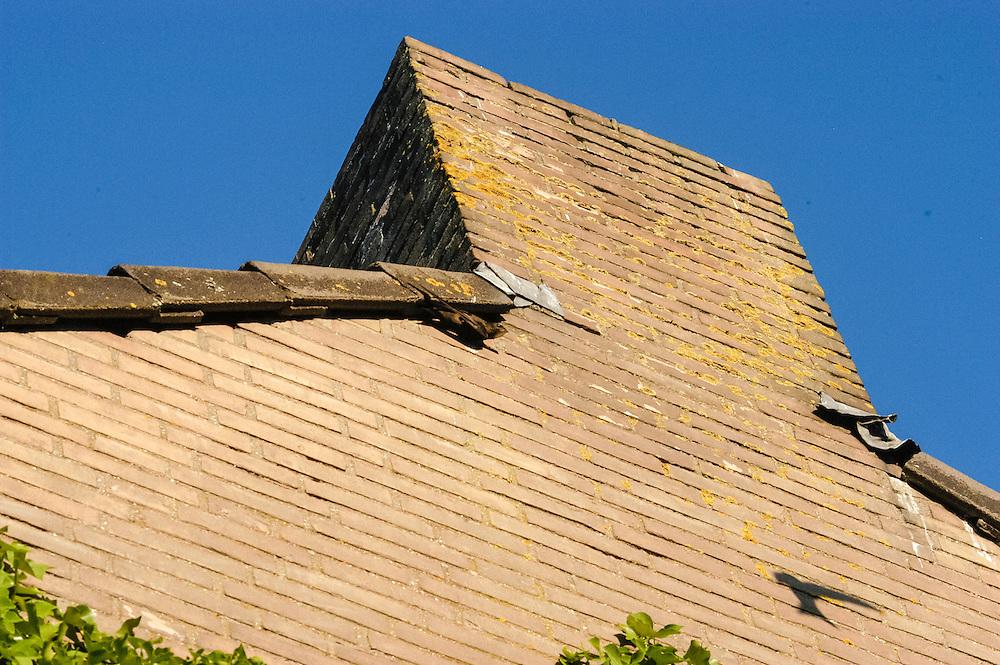 Gierzwaluw onder dakrand