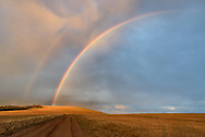 A colorful rainbow glows above a dirt road near Hunt Mountain in the Bighorns.