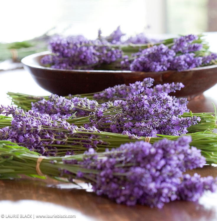 Lavender bundles botanical photo