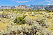 Sagebrush in Antelope-brush and shrub steppe ecosystem. Okanagan Valley. , Osoyoos, British Columbia, Canada