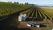 Saffron Fields pinot noir harvest 2018, Yamhill-Carlton AVA, Willamette Valley, Oregon