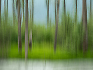 In-camera motion blur of forest and stream near Valdez in Southcentral Alaska. Summer. Morning.