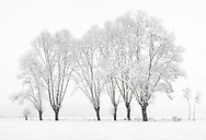 Snow in the ground and hazy atmosphere are just the best conditions for highly graphical and minimalist photos such as this one. I took this picture in the fields around the small town of Scalenghe in Piedmont, Italy, on a cold morning at the middle of Decemeber, under a heavy snowfall. the different sizes and shapes of the trees and how they looked like, almost suspended in the snowy white below and the foggy white above, gave a zen garden-like mood to this scene, in my opinion.
