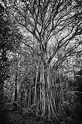 Banyan Tree. Maldives