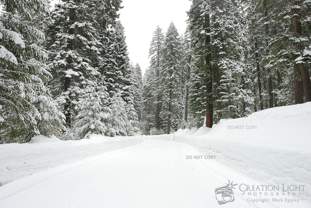 Many feet of snow fall in the Cascade Mountains each year.  The snow coats trees and snow levels on the side of the road increase as the main roads are plowed after each snow fall.