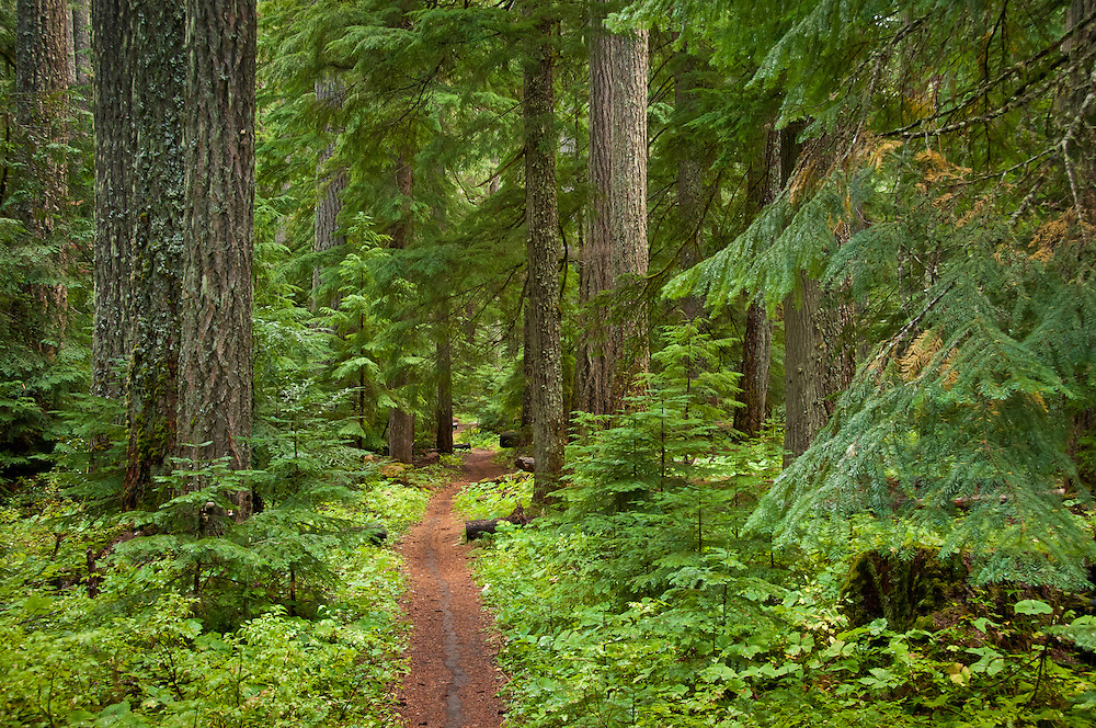 McKenzie River National Recreation Trail near Clear Lake, Willamette National Forest, Oregon.