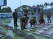 FANGCHENGGANG, CHINA - JANUARY 19: (CHINA OUT) <br /> <br /> Frontier Police Capture 70 crocodile<br /> <br /> A frontier police team check the Siamese crocodile and tails of Siamese crocodile captured from an illegal transport case on January 19, 2016 in Fangchenggang, Guangxi Province of China. The police seized 70 Siamese crocodile and 88 tails of Siamese crocodile when inspecting a seafood truck on Tuesday and these Siamese crocodile have transferred to forestry department. <br /> ©Exclusivepix Media