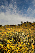 Desert in Spring - Phoenix - Arizona
