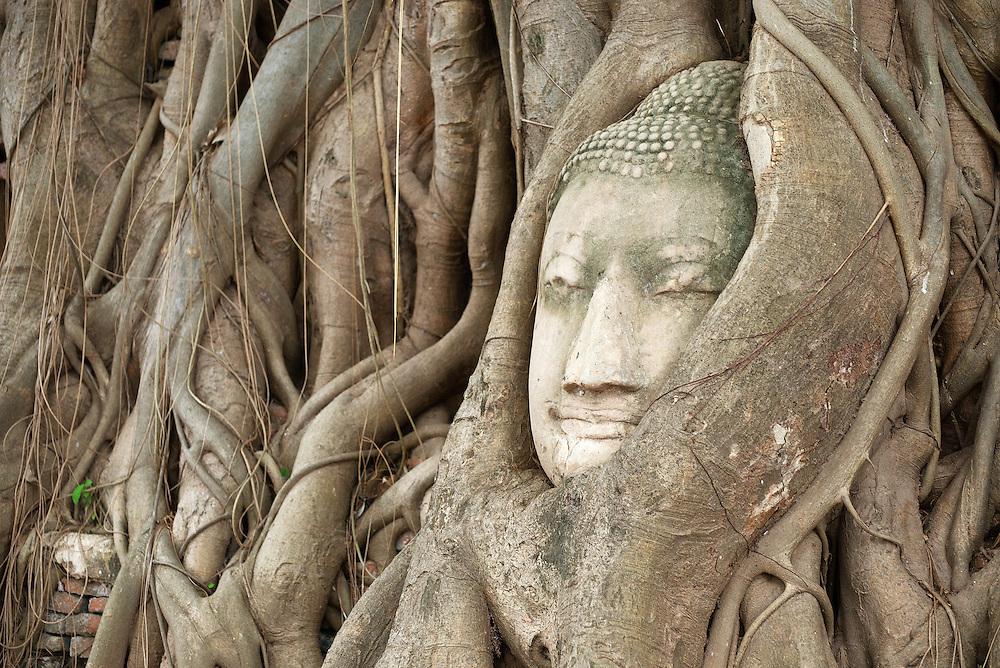 The iconic Buddha Head entwined within the roots of a tree at Wat Mahathat of Ayutthaya, Thaliand