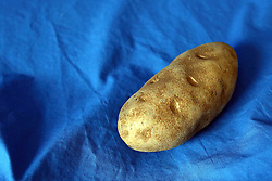 18 February 2016:   Studio - Potato on blue #023.  A single baking potato shot in a studio on a blue background.