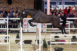 022, Querido VG<br /> Hengstenkeuring BWP - Lier 2019<br /> © Hippo Foto - Dirk Caremans<br /> 18/01/2019