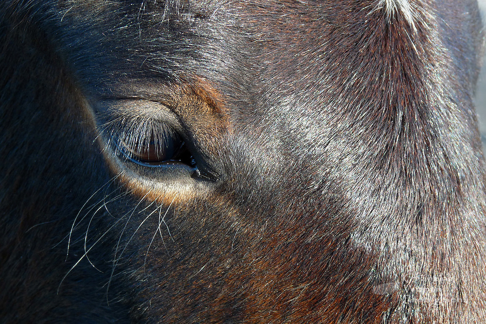 Eye to eye with a Nevada mustang near Cold Creek, north of Las Vegas