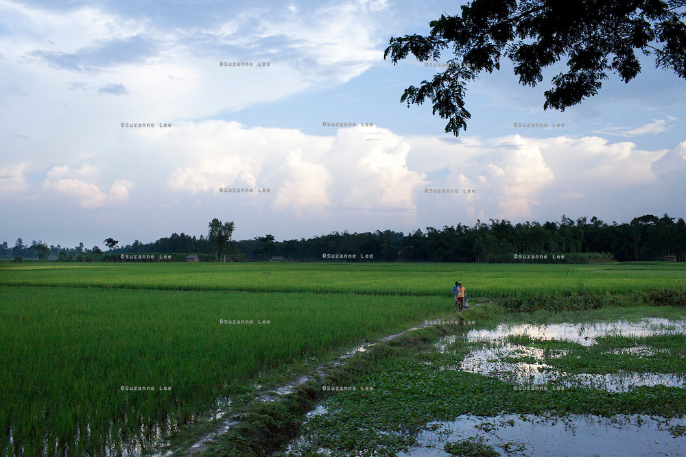 Farmers walk through their paddy fields after a day of work in rural Bangladesh near Rangpur, northern Bangladesh on 19th September 2011. Photo by Suzanne Lee for The Guardian