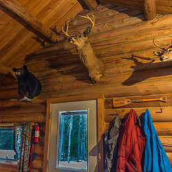 Taxidermy on the wall in the Bridge Cabin at Bowlin Camps near Patten, Maine, and Katahdin Woods and Waters National Monument.