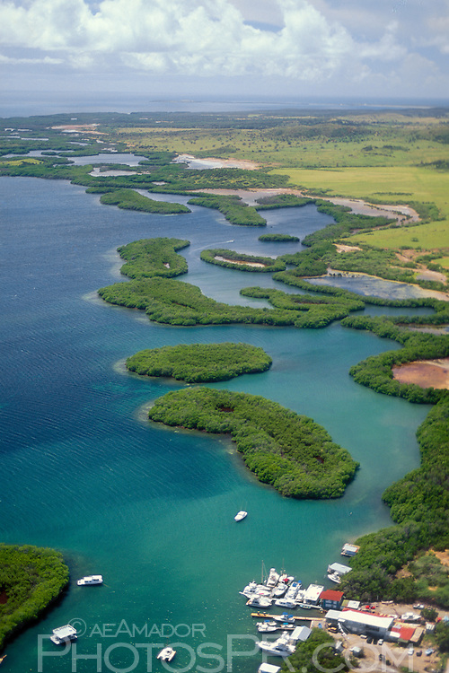 Aerial view of mangrove growth along the shore