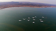 WEIHAI, CHINA - DECEMBER 08: (CHINA OUT)<br /> <br /> Thousands Of Swans Migrate To Shandong In Winter<br /> <br /> Swans look for food at a harbor in Yandunjiao Village, Madao County on December 8, 2015 in Rongcheng, Weihai City, Shandong Province of China. Nearly ten thousands swans from Siberia and Northeast China would fly to Rongcheng in Weihai City every winter.<br /> ©Exclusivepix Media
