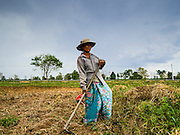 09 MAY 2016 - SANGKHA, SURIN, THAILAND: A woman works in her rice field with her son, preparing to plant the 2016 rice crop. Normally the fields would have been prepped in April and rice planted in May but farmers are several weeks behind schedule because of the drought in Thailand. Thailand is in the midst of its worst drought in more than 50 years. The government has asked farmers to delay planting their rice until the rains start, which is expected to be in June. The drought is expected to cut Thai rice production and limit exports of Thai rice. The drought, caused by a very strong El Nino weather pattern is cutting production in the world's top three rice exporting countries:  India, Thailand and Vietnam. Rice prices in markets in Thailand and neighboring Cambodia are starting to creep up.     PHOTO BY JACK KURTZ