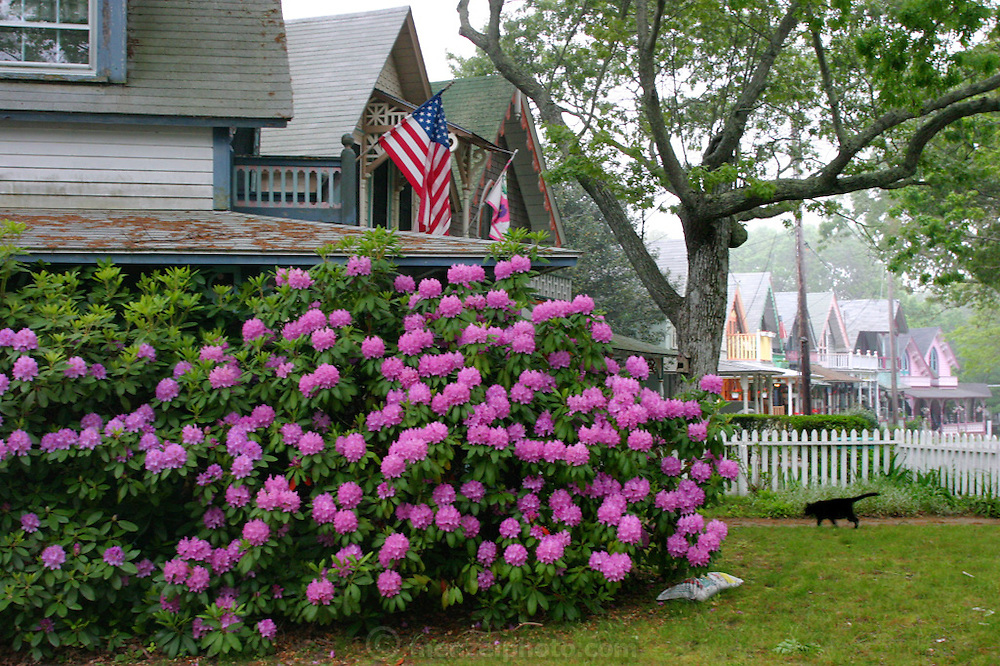 In the town of Oak Bluffs on Martha's Vineyard, Massachusetts.