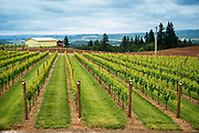 Bjornson Vineyards