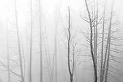 Trees in fog on Lyons Lake<br /> Whiteshell Provincial Park<br /> Manitoba<br /> Canada