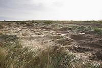 UK Norfolk field of grass