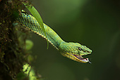 Ecuador Snakes