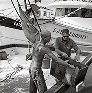 The crew of the Lady Caroline unload the days catch at the Wando Seafood docks on Shem Creek in Mount Pleasant, South Carolina | July 27, 2004